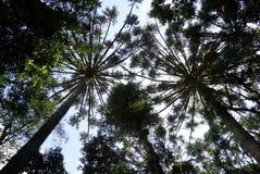 Sörja träd Fotografering för Bildbyråer