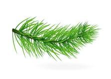 Sörja-träd Gran-träd Sörja filialer Träd jul min version för portföljtreevektor nytt år Arkivfoto