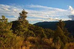 Sörja träd i bergen på solnedgången Royaltyfri Fotografi