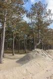 Sörja träd i dyerna på Nordsjön i holland arkivfoton