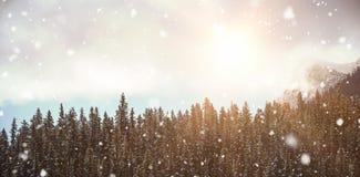 Sörja träd i skogen 3d Arkivfoton