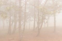 Sörja träd i skogen som täckas i dimma under höst Royaltyfri Bild