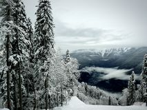 Sörja träd i snö, den snöig dalen Royaltyfri Fotografi