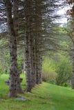 Sörja träd i Vermont royaltyfria bilder