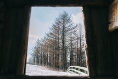 Sörja träd i vinter på Daegwallyeong, Sydkorea royaltyfria foton