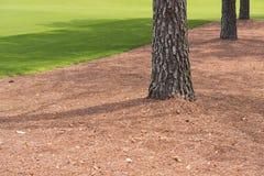 Sörja träd längs golfbana Fotografering för Bildbyråer