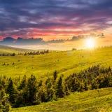 Sörja träd nära dalen i berg på backen på solnedgången Royaltyfri Bild