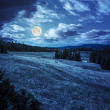 Sörja träd nära dalen på berglutning på natten Arkivfoton