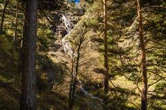 Sörja träd och den Mojonavalle vattenfallet i bakgrunden i en skog i Canencia Madrid i vår arkivfoto