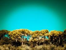 Sörja träd på bakgrund för blå himmel royaltyfri fotografi