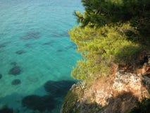 Sörja träd på den steniga Aegean kusten, Grekland arkivbild