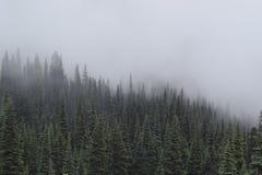 Sörja träd på ett berg mot en dimmig himmel royaltyfri bild