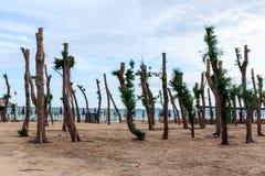 Sörja träd på stranden beskars Arkivbild