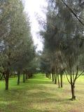 Sörja träd parkerar royaltyfri foto