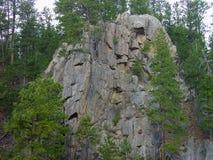 Sörja träd växa på steniga kullar i Blacket Hills i South Dakota arkivfoton