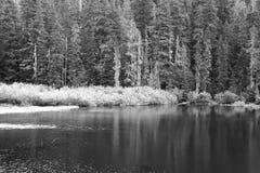 Sörja träd vid sjön royaltyfri foto