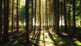 Sörja trädbakgrund Arkivbilder