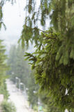 Sörja trädcloseupen Fotografering för Bildbyråer