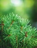 Sörja träddetaljen Arkivfoton