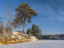Sörja trädet över den djupfrysta floden Royaltyfria Bilder