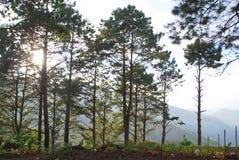 Sörja trädet Fotografering för Bildbyråer