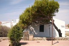 Sörja trädet framme av ett hus Fotografering för Bildbyråer