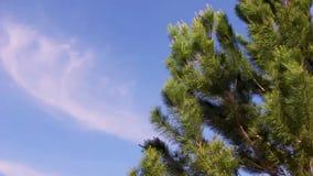 Sörja trädet i en blåsig dag
