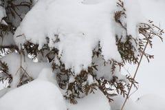 Sörja trädet i snön Arkivbild