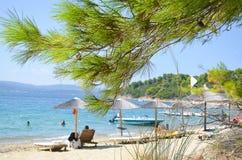 Sörja trädet i stranden Arkivbild