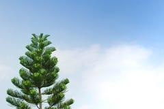Sörja trädet i trädgård Arkivfoto