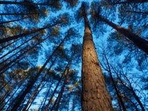 Sörja trädet i träna Fotografering för Bildbyråer