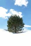 Sörja trädet i vintersnö Arkivbild