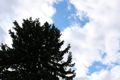 Sörja trädet med molnig himmel Fotografering för Bildbyråer