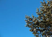 Sörja trädet med snö om den soliga vinterdagen Arkivfoto