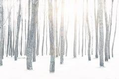 Sörja trädet med snö på vinter Arkivfoton