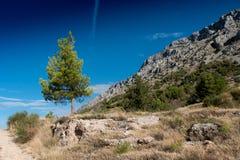 Sörja trädet med vägen Arkivfoton