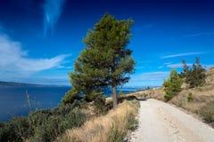 Sörja trädet med vägen Fotografering för Bildbyråer
