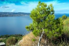 Sörja trädet och ön av Brac Arkivbilder