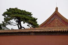 Sörja trädet och den dekorativa fasaden i Forbiddenet City Royaltyfri Bild