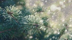 Sörja trädet och snöa nedgången arkivfoton