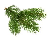 Sörja trädet som isoleras på vit utan skugga arkivfoton