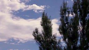 Sörja trädet som vinkar i vinden