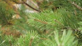 Sörja trädfilialen lager videofilmer