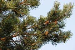 Sörja trädfilialen Fotografering för Bildbyråer
