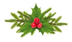 Sörja trädfilialen med kotten Royaltyfria Bilder