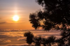 Sörja trädfilialer överst av Mt Hamilton, San Jose, södra San Francisco Bay område; härlig solnedgång över ett hav av moln i arkivbild