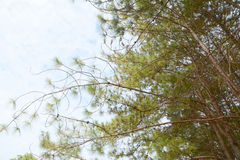 Sörja trädfilialer Royaltyfri Foto