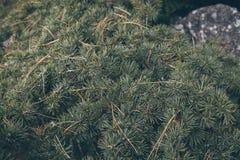 Sörja trädsidabakgrund Sörjer den övre sikten för slutet av gräsplan sidor på en brach som textur och bakgrund fotografering för bildbyråer