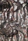 Sörja trädskället Arkivfoton