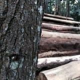 Sörja trädskället Royaltyfria Bilder